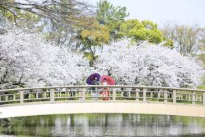 桜 名古屋の格安前撮り和装ロケーションフォト