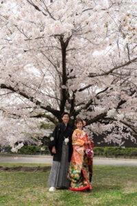 名古屋城で桜ロケーションフォト和装ロケーション前撮りおすすめ