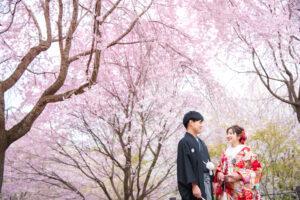 名古屋で和装の桜前撮り後撮り。安くておしゃれ