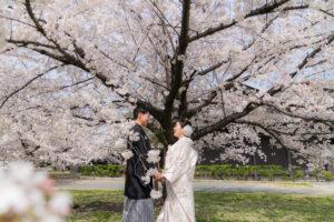桜の和装ロケーション前撮り白無垢