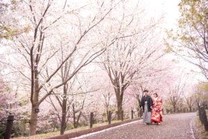 東山動植物園内で桜の和装ロケーションフォトウェディング